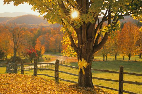 Get ahead of the autumn health curve